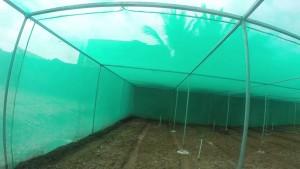 Затеняющая сетка – все что нужно, для хорошего урожая